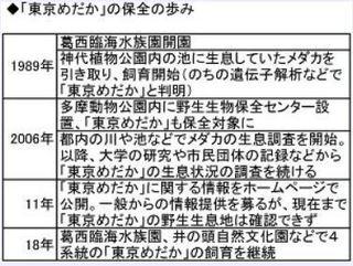「東京めだか」の保全の歩み.jpg