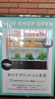 めだかやドットコム本店.JPG