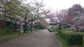 ベルコリーヌ南大沢2.JPG