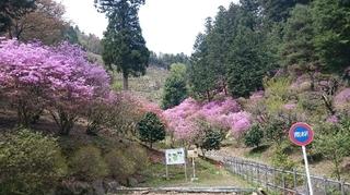 今熊山7.JPG