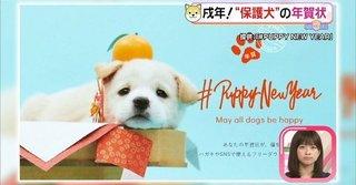 保護犬カフェ.jpg