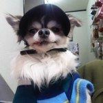 保護犬カフェ西八王子店.jpg