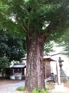 多賀神社4.JPG