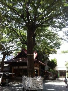 子安神社2.JPG