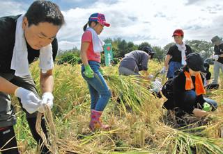 昨年9月、市民も参加した酒米の収穫=八王子市高月町で.jpg