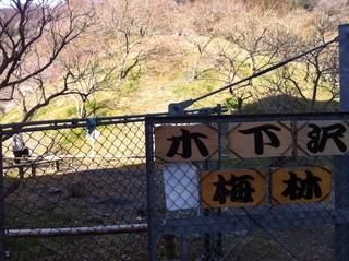 木下沢梅林1.jpg