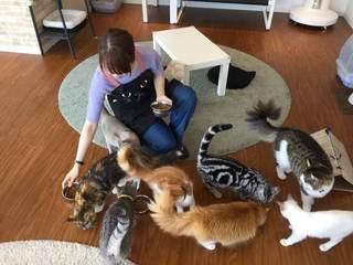 猫カフェ「コックんの別荘 八王子OPA店」1.jpg