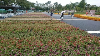 第34回全国都市緑化はちおうじフェア2.JPG