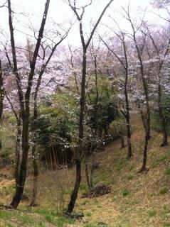 都立滝山公園16.JPG