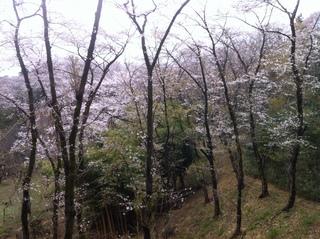 都立滝山公園17.JPG