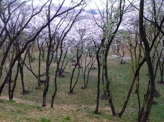 都立滝山公園25.JPG