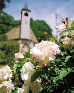 鑓水の結婚式場、八王子日本閣のバラ.jpg